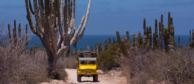 Désert, Cabo San Lucas, Mexique