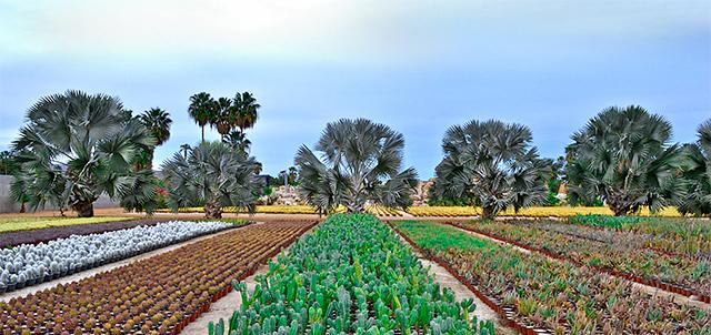 Jardin botanique, Cabos