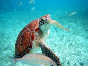 tortue-marine-mexique